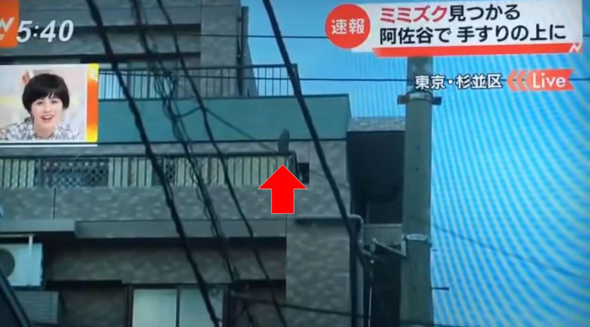 テレビ誤報